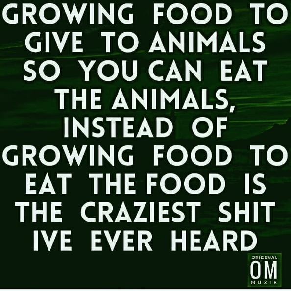Growing food to give to animals so you can eat the animals.jpg